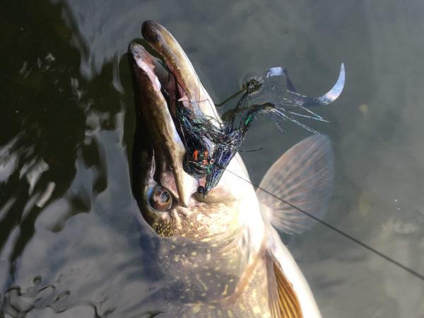 Proef vissen met de Back in black
