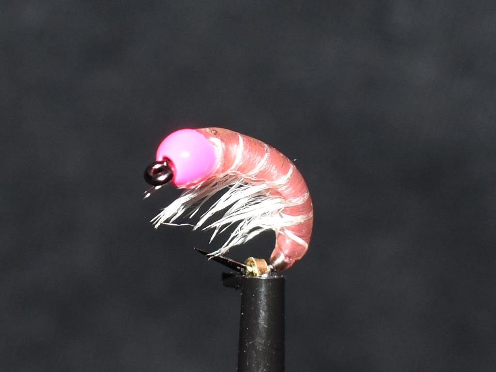 N0033 Shrimp