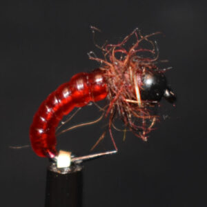 N0036 Shrimp