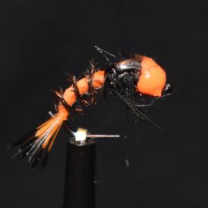 N0040 Shrimp