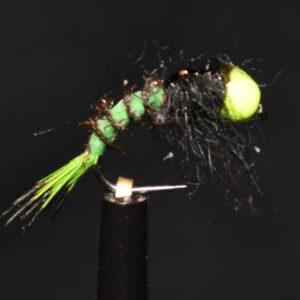 N0041 Shrimp